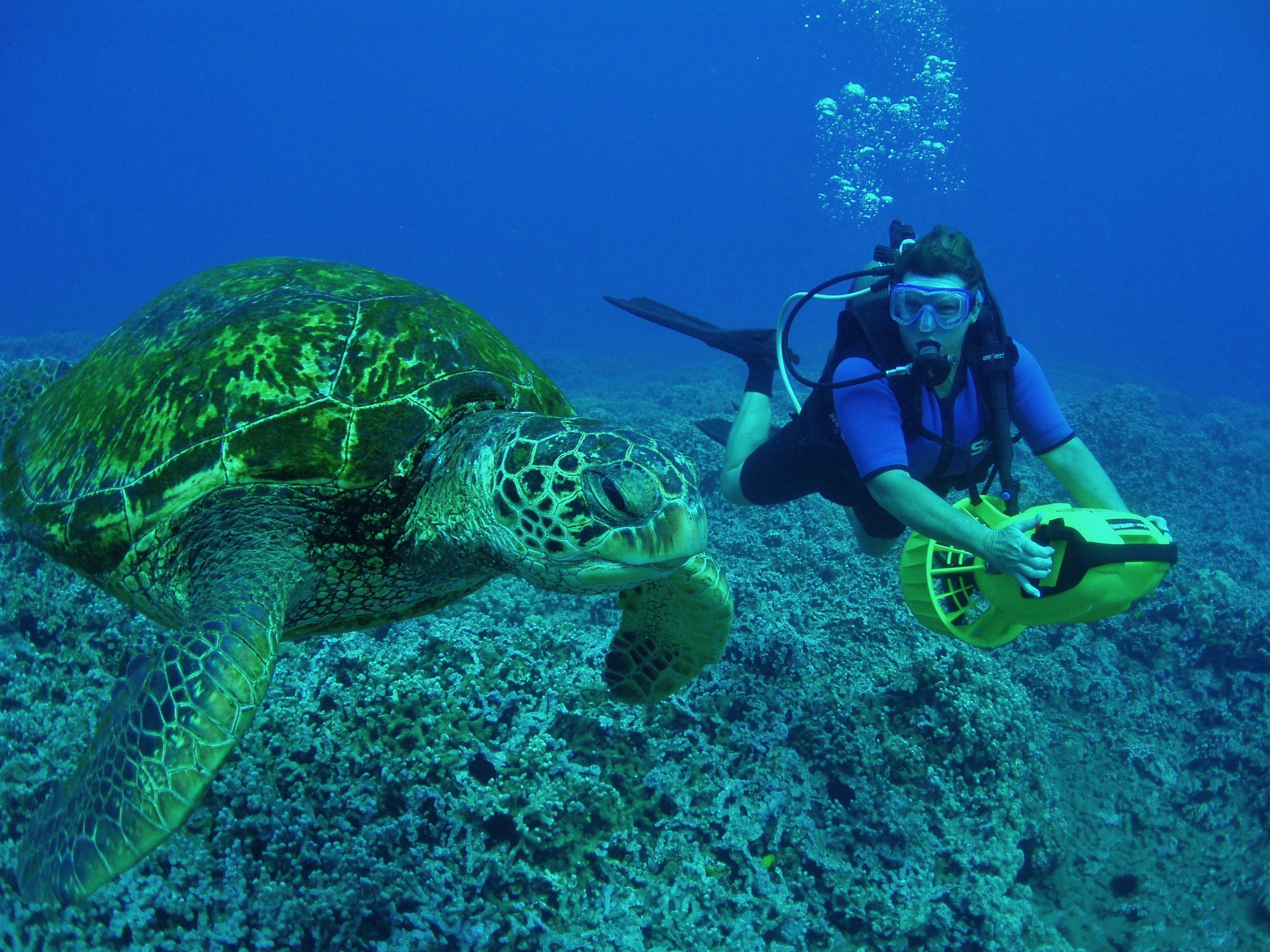 Baby Green Sea Turtles - photo#21