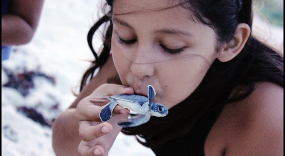 Volunteering for the Baby Sea Turtle Hatching in Cozumel Mexico is a great activity in Cozumel