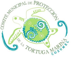 Cozumel Volunteer Turtle Salvation Program in Cozumel