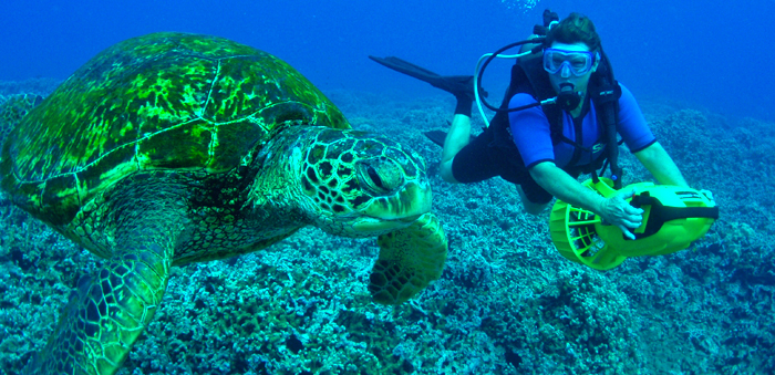 The Green Turtle in Cozumel while Diving in Cozumel Mexico