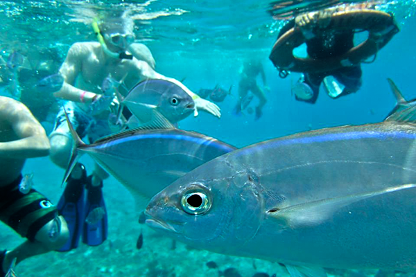 Snorkeling in Cozumel to the Best Cozumel reefs with our Cozumel Snorkeling Tour in Cozumel Mexico