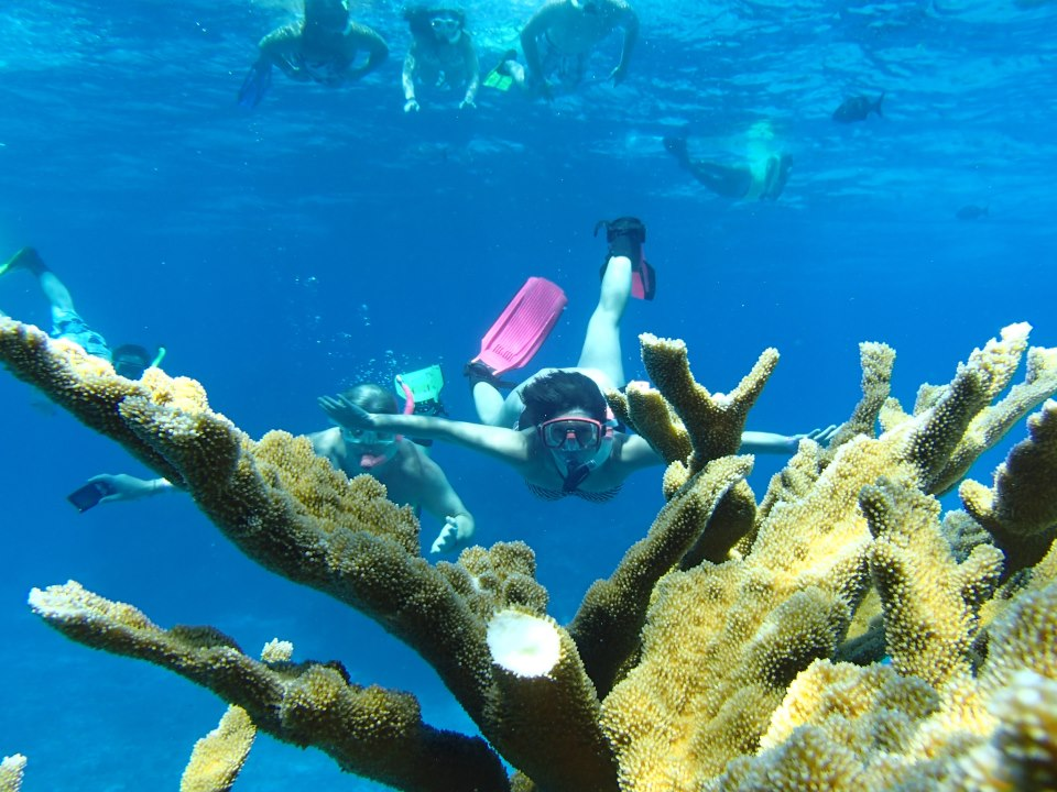 Cozumel Snorkeling Tour with Best Snorkel Tours in Cozumel Mexico