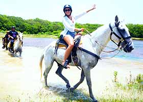 Cozumel Horseback Riding | Go Horse Backriding in Cozumel Jungle to Explore the Sights & Sounds of Isla Cozumel