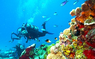 things to do at cozumel with diving at palancar reefs