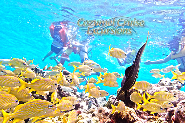 guided cozumel snorkel tour and beach club in cozumel mexico