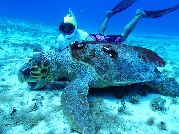 best cozumel snorkel tour in cozumel mexico