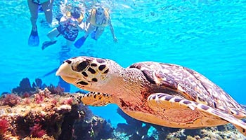 Cozumel Snorkeling tours are rated #1 for best snorkeling in Cozumel with our Cozumel snorkel tours
