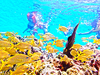 Discover Cozumel's Mesmerizing Reefs with our Cozumel Snorkel Excursion