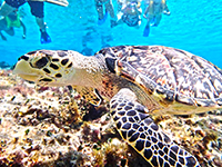 best snorkeling Cozumel Mexico