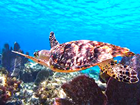 Best Cozumel Snorkeling Tours to discover the Best Cozumel Reefs in Cozumel Mexico