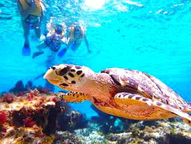 Snorkel the Best Cozumel Reefs with our #1 Snorkel Tour in Cozumel Mexico