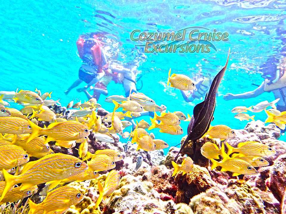 Best Snorkeling In Cozumel 30%OFF