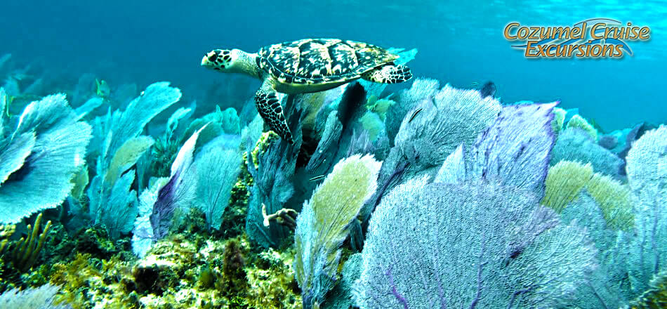 Take a Snorkel Adventure in Cozumel for the best snorkeling Cozumel has to offer